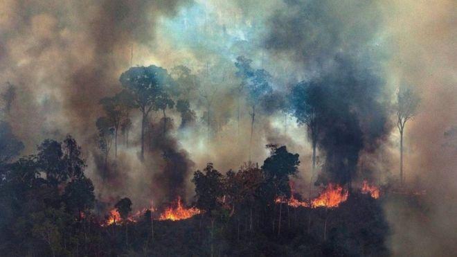 Brasil: Muerte y destrucción en la Amazonía de Bolsonaro